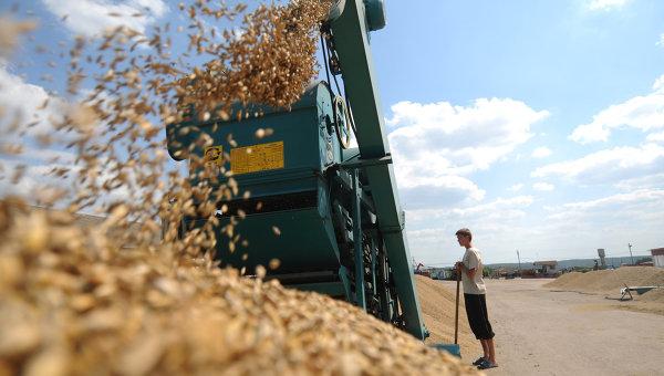 Сбор урожая на сельхозпредприятии Пульс-Агро. Архивное фото