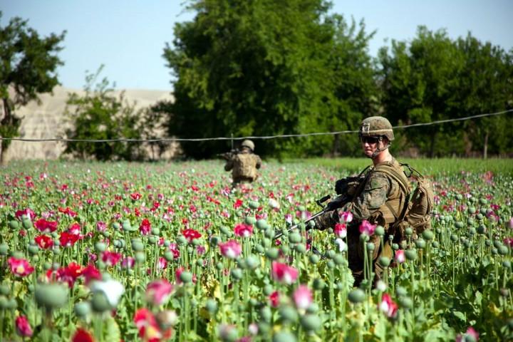 ФСКН: посевы опиумного мака в Афганистане поставили новый рекорд