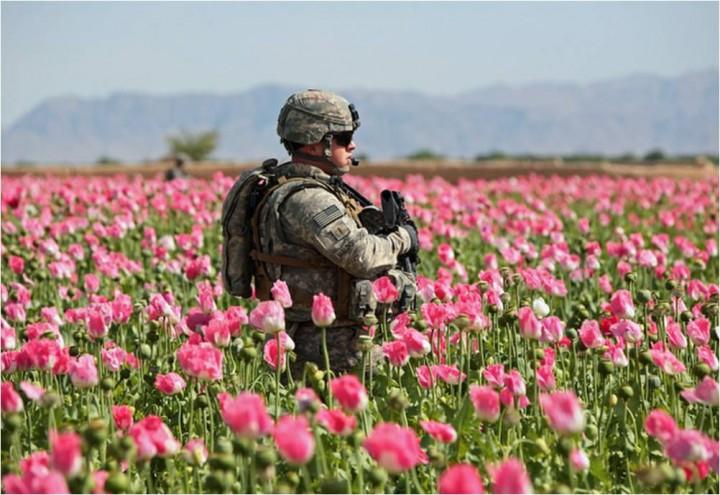 Капитал для террора. Вторжение США  и  рост производства наркотиков в Афганистане в 3 раза