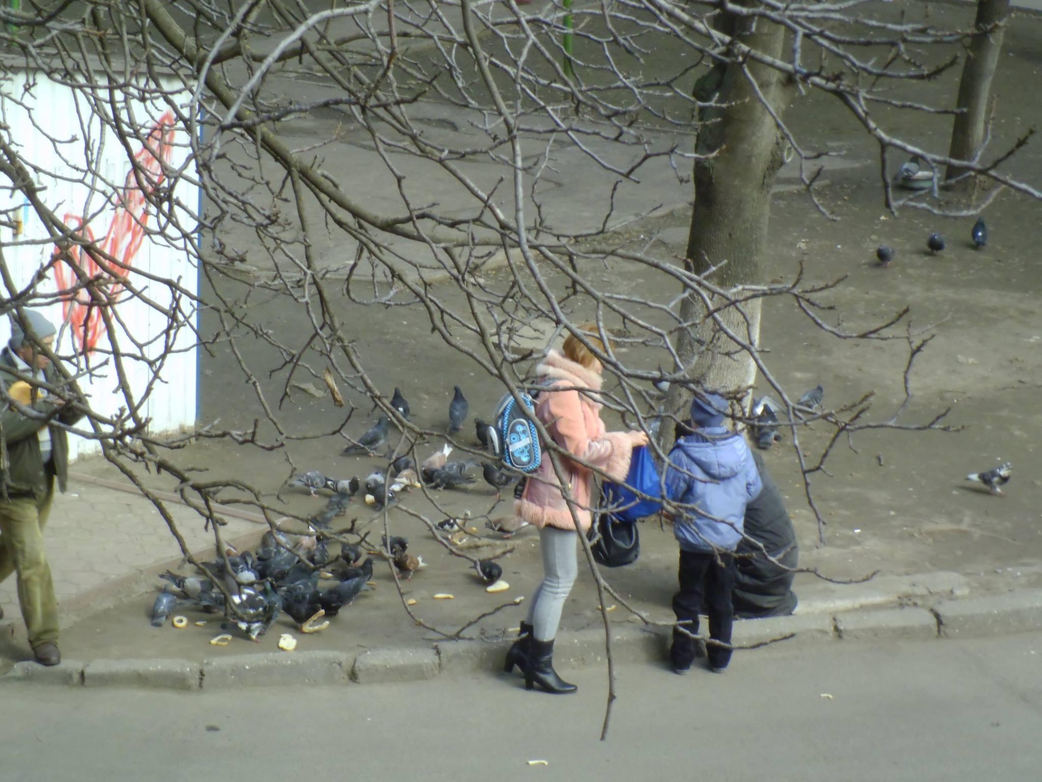 «Жизнь по–новому»: голодная одесситка отбирала хлеб у голубей
