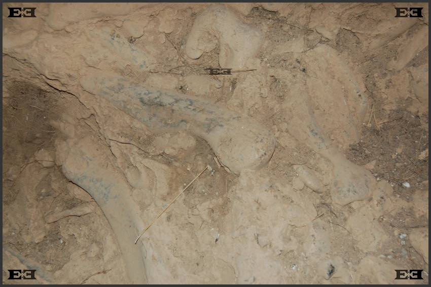 ghar-dalam-fossilised-bones