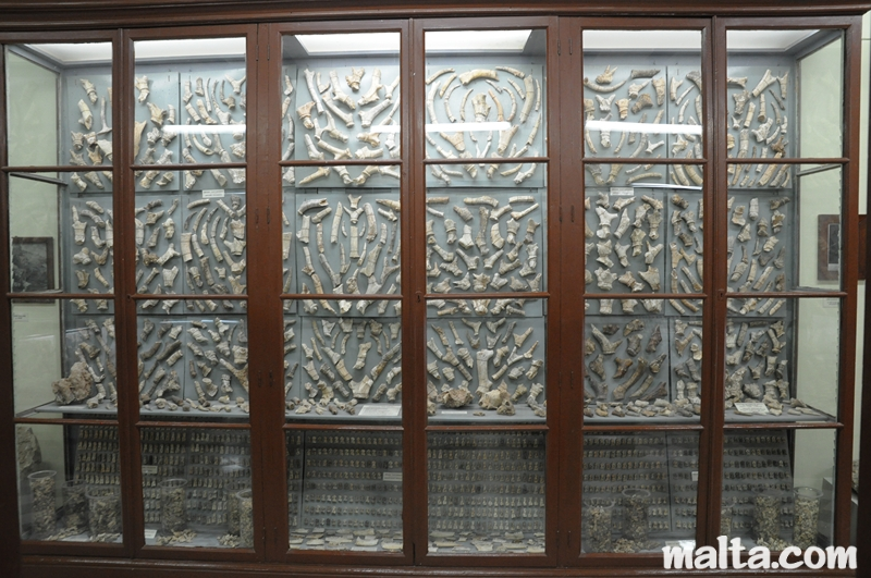 bones-collection-in-the-ghar-dalam-cave-s-museum-in-birzebbuga