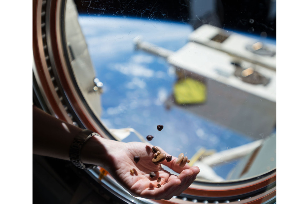 Перекус. Фото: ©flickr.com/NASA Johnson