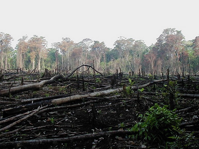 the devastating effects of environmental degradation Abstract in nigeria, like many developing nations, the resultant environmental problems are legion: aggravated soil erosion, flood disasters, salinization or alkalisation, and the desertification due to the effects of shifting agriculture on fragile soils, forest clearing in erosion prone and flood-prone areas, bush burning, animal over-grazing and poor.