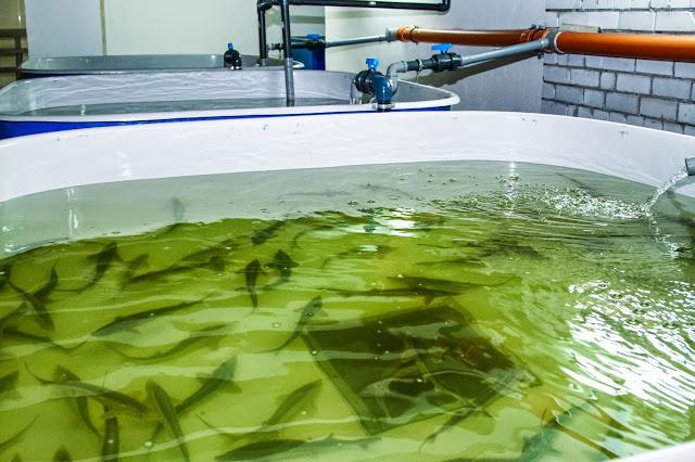 В Волгоградской области идет воспроизводство биологических ресурсов
