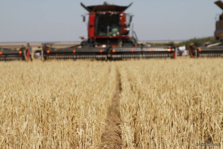 Превзошли ожидания: крымские аграрии увеличивают площади посева