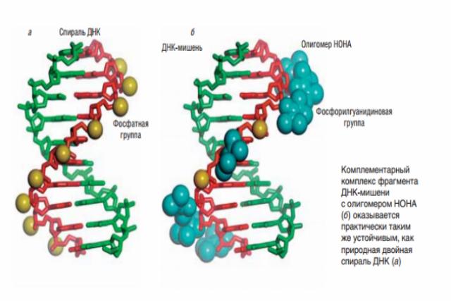 Новосибирские химики открыли новый класс веществ, способных влиять на гены